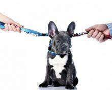 Как делят домашних животных при разводе: по соглашению и через суд
